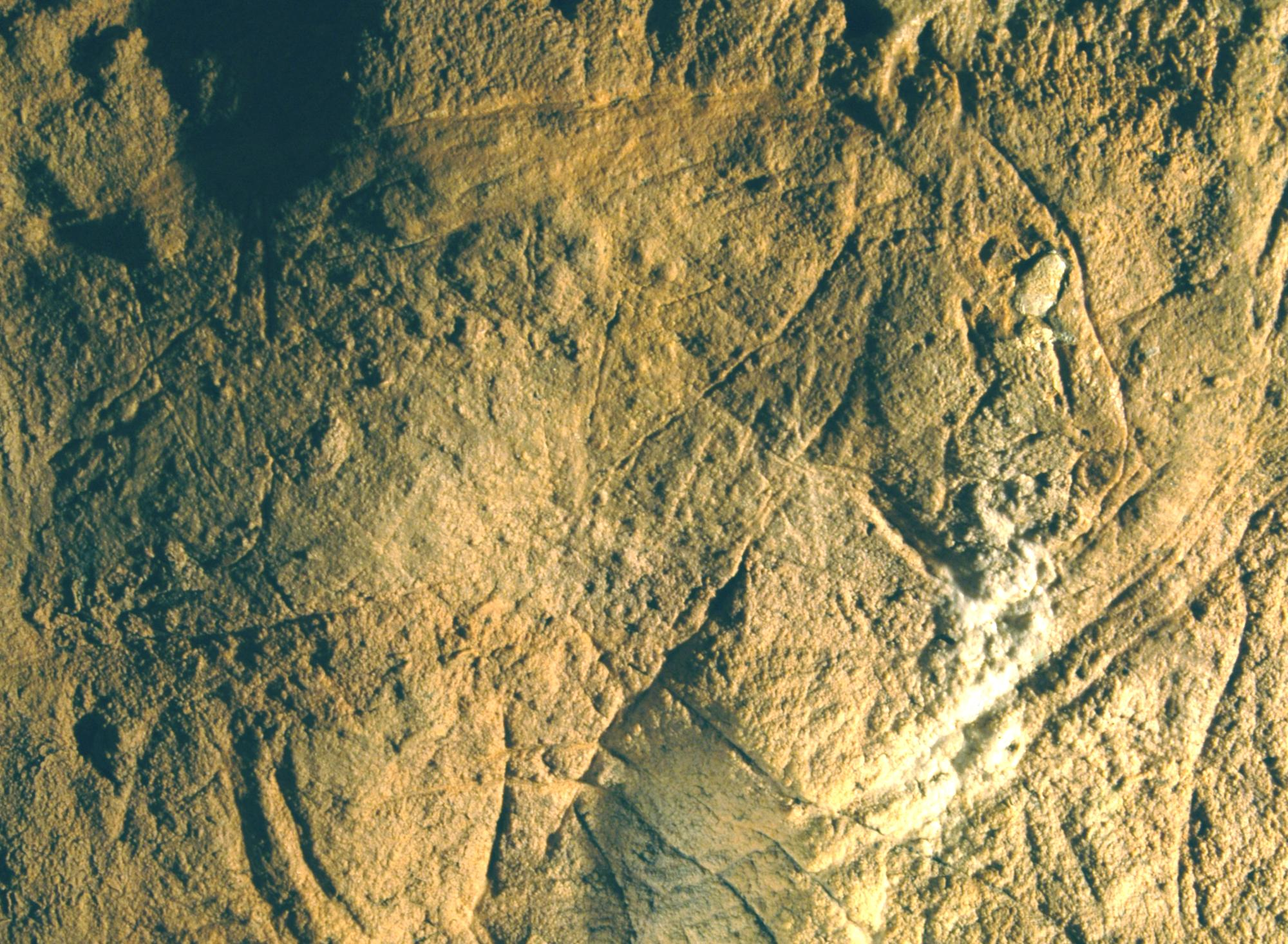 Cave Paintings in Les Combarelles Cave | Allwood Courier