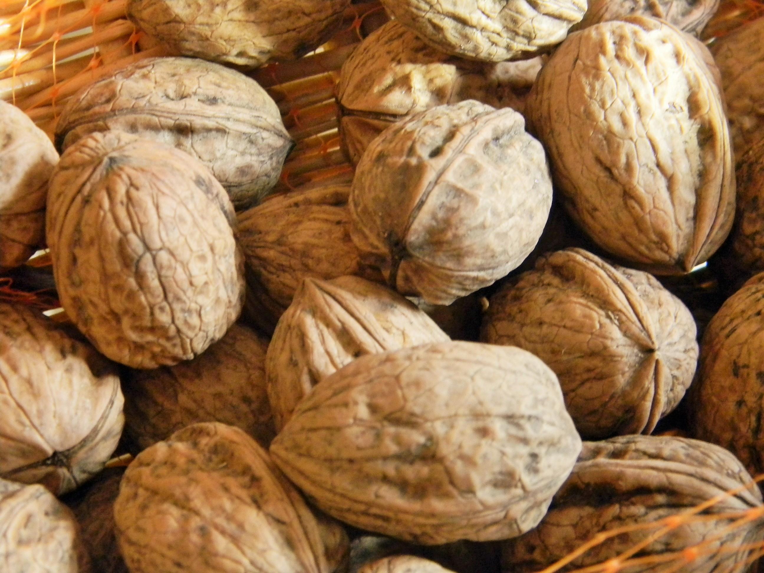 La noix du p rigord lascaux dordogne vos vacances en for Quand ramasser les noix