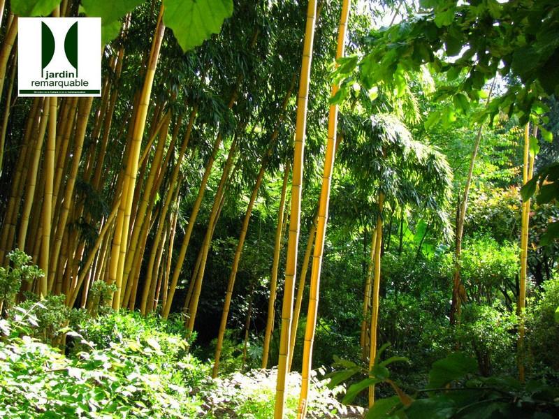 Jardin Les Bambous De Planbuisson Lascaux Dordogne Your