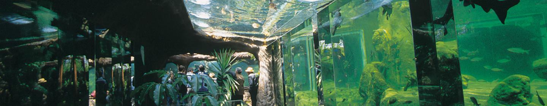 Aquarium_Perigord Noir_Univerland_Le Bugue