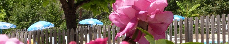 La vie en rose à La Castillonderie
