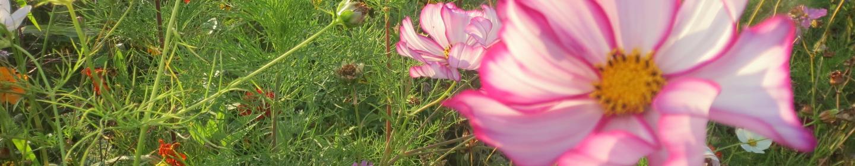 Flower Dordogne