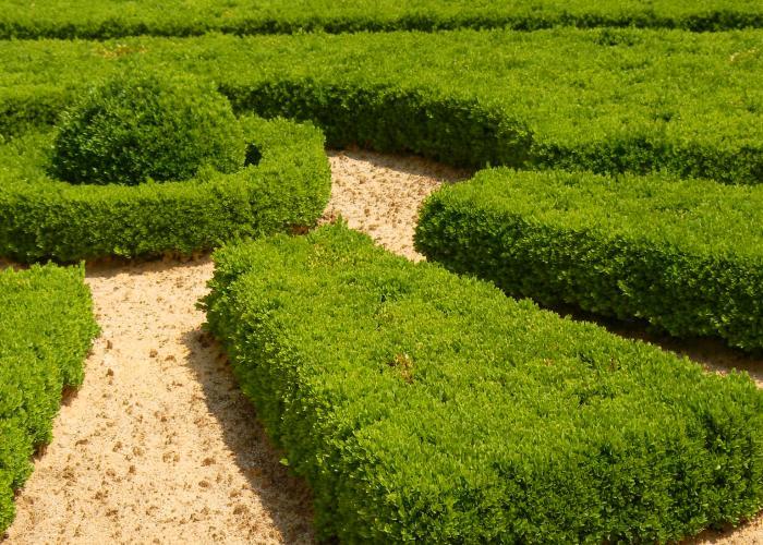 Jardines de Hautefort- rendez vous aux Jardins