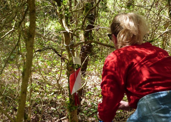 Cluedo nature - Ete actif - Forêt de Campagne ©A.Borderie