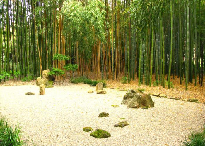 les bambous de Planbuisson - rendez vous aux jardins