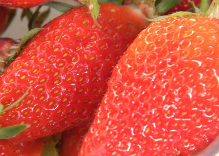 fresa del Périgord