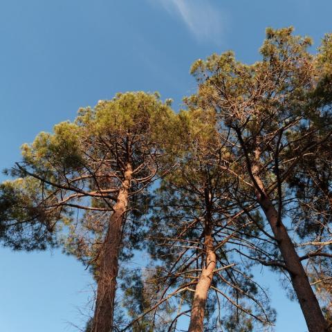 Nature Décembre ©ALR