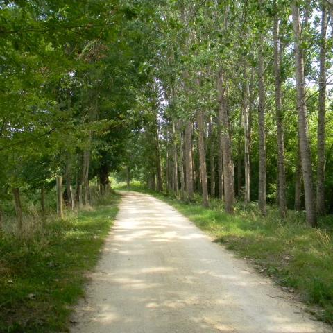 Le_Bugue_chemin_septembre2011©ALR